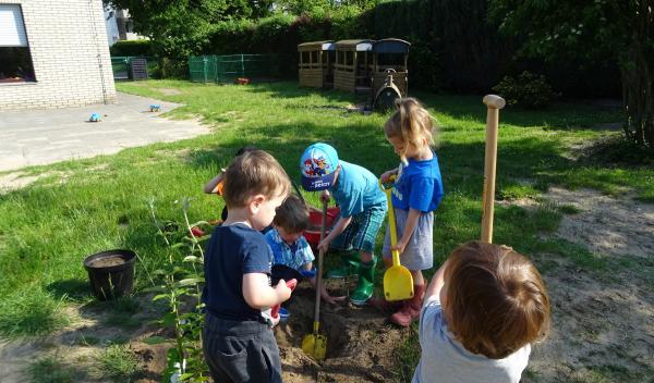 Wir pflanzen neue Schmetterlinssträuche