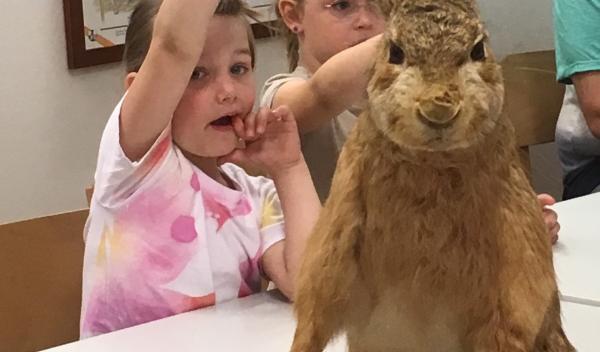 Der Maxi – Club besuchte im Mai die Waldschule und lernte viel über die heimischen Tiere