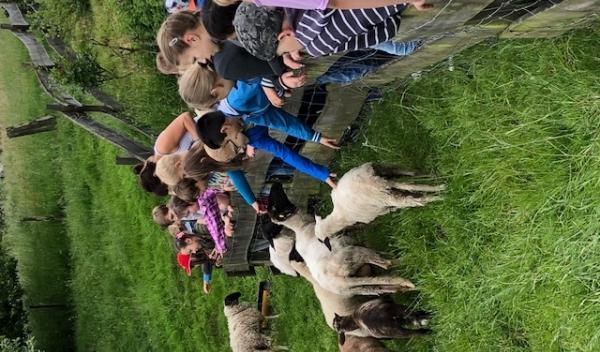 Schafe streicheln